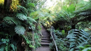 1000 Steps in Dandenong Ranges National Park